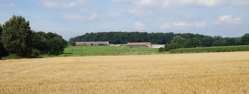 Buxtehude Hedendorf